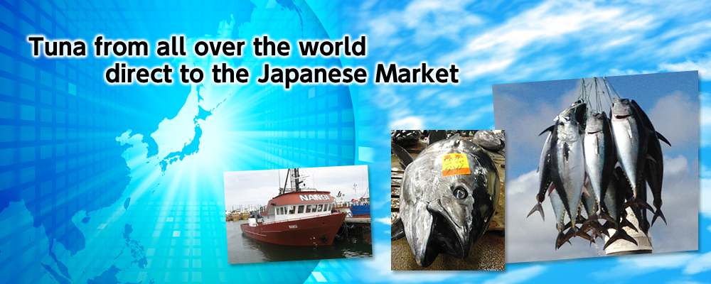 Tuna from all over the world direct to Japanese Market